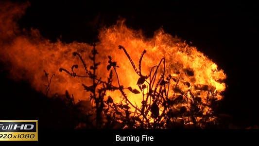 Thumbnail for Campfire At Night