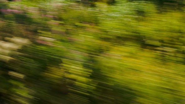 Thumbnail for View Of Passing Green Trees From Speed Train