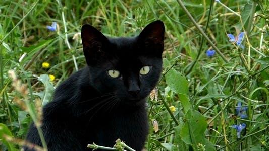 schwarz Katze im Garten 1