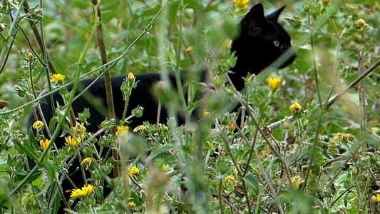 Thumbnail for Black Cat in the Garden 2