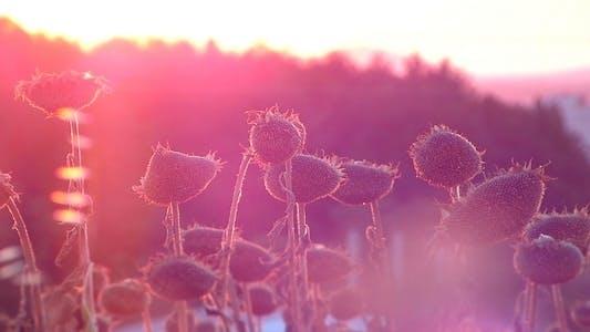 Thumbnail for Epischer Sonnenuntergang