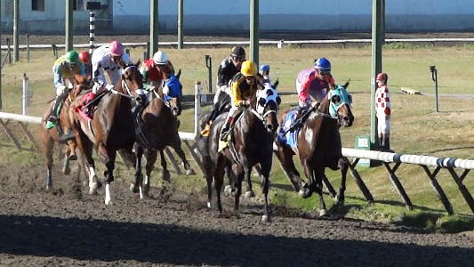 Thumbnail for Horse Racing
