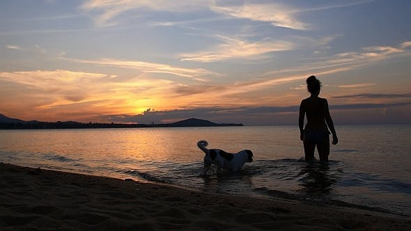 Thumbnail for Woman with Dog in the Sea at Sunset