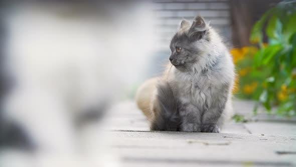 Thumbnail for Kittens in the Backyard