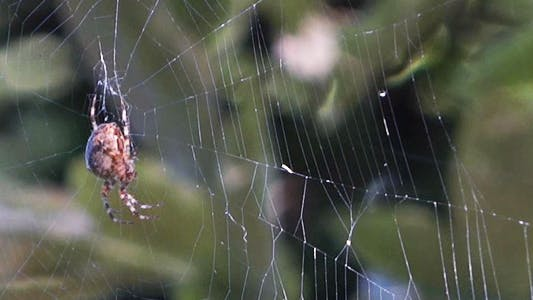Thumbnail for Spider On Forest Web - 1