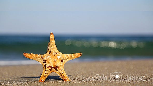 Thumbnail for Starfish
