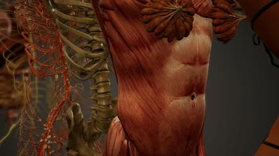 Animated 3D Human Anatomy Illustration