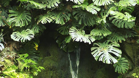 Cover Image for Tropical Plant and Waterfall 2