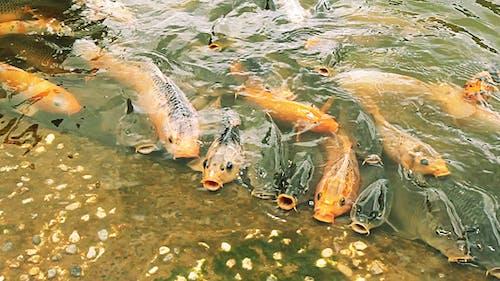 Fishery Free Zone