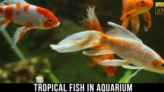 Thumbnail for Tropical Fish In Aquarium 5