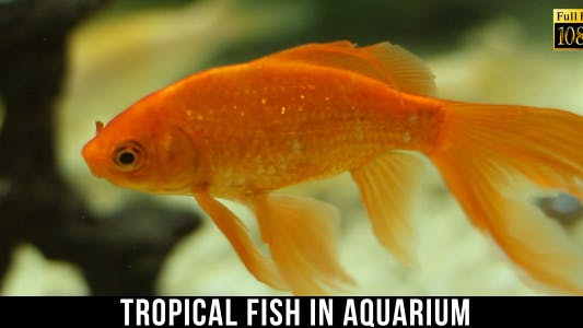 Thumbnail for Tropical Fish In Aquarium 6