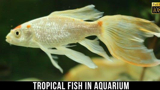Cover Image for Tropical Fish In Aquarium 7