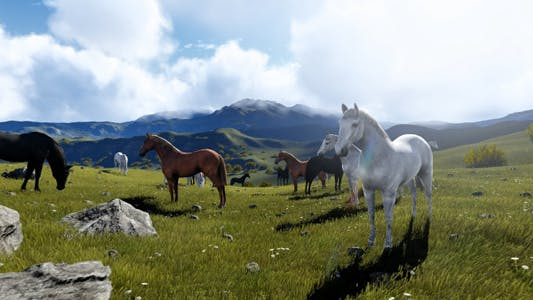 Paradise Of Horses