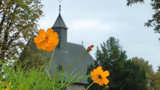 Thumbnail for Yellow Flowers and Blurry Church Building