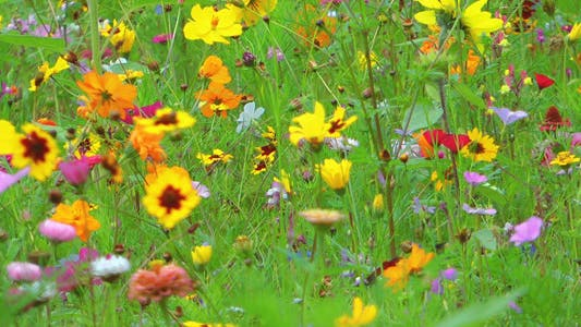 Thumbnail for Colorful Flowers 2