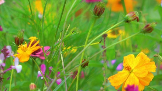 Thumbnail for Colorful Flowers 9
