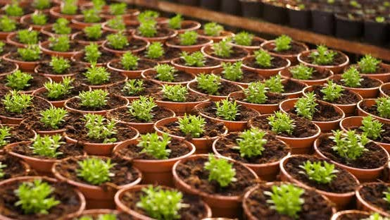 Cover Image for Potted Plants Growing in Greenhouse Agriculture