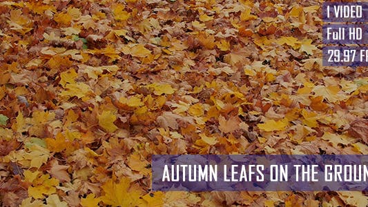 Thumbnail for Colorful Autumn Leafs On The Ground
