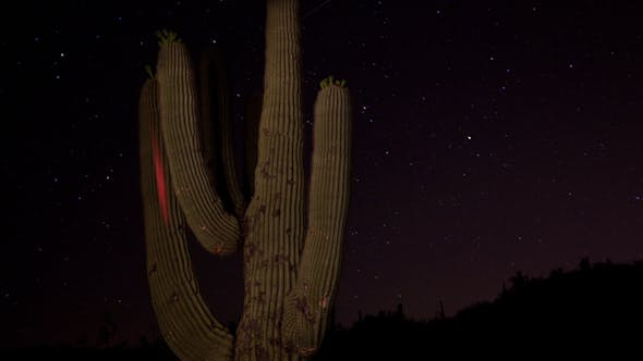 Thumbnail for Cactus Starlapse