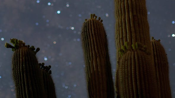 Thumbnail for Cactus Starlapse Baja California Sur Desert