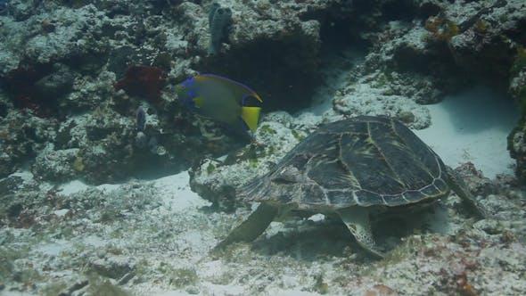 Turtle Cozumel Mexico