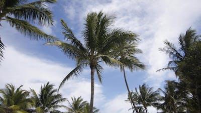 Miami Palms 01