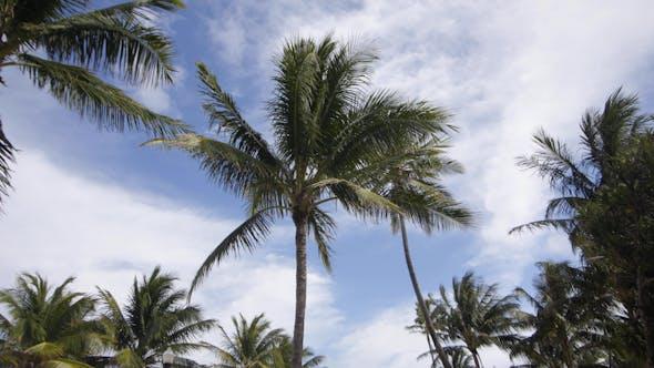 Thumbnail for Miami Palms 01