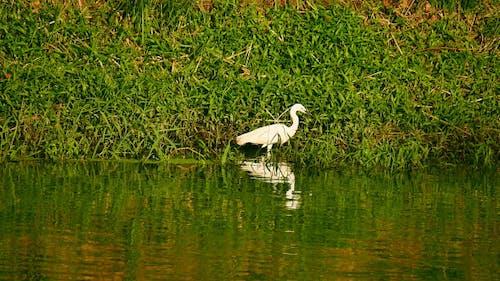 Bird Standing On Waterside