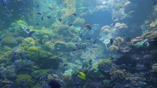 Thumbnail for Unterwasser-bunte tropische Fische. Tropische Unterwasserfische.