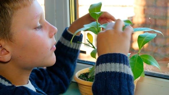 Boy Sees Flower Pot