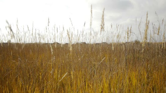 Thumbnail for Autumn Dry Grass And Village