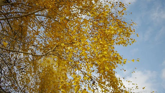 Cover Image for Autumn Leaves And Blue Sky