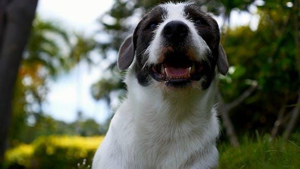 Thumbnail for Cute Dog