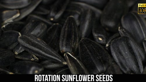 Rotation Sunflower Seeds