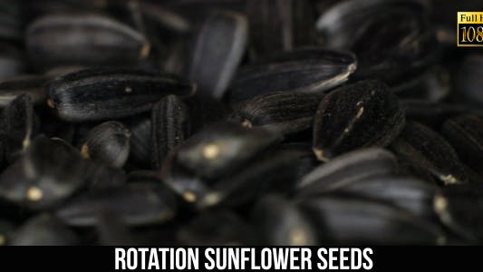 Thumbnail for Rotation Sunflower Seeds 3