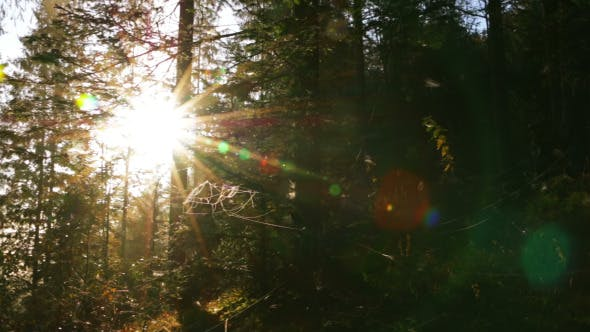 Thumbnail for Bright Sun in the Dense Forest