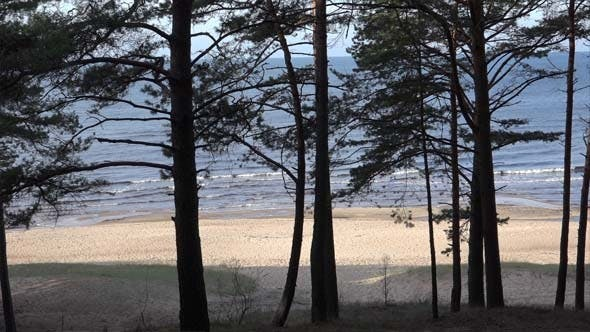 Thumbnail for Baltic Sea Through Pine Forest