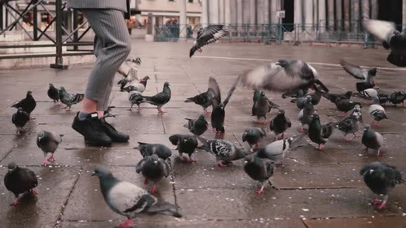 Thumbnail for Happy Excited Female Reporter with Camera Walks on Autumn San Marco Square and Flock of Pigeons in