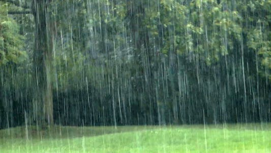 Thumbnail for The Rain and the Green Nature Trees 3