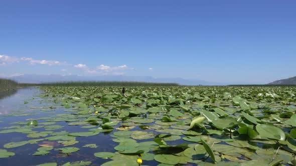 Thumbnail for Cormorant Bird on Famous Lake Skadar in Montenegro