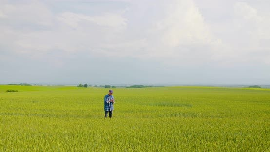 Cover Image for Farmer Examining Agriculture Field on Farm