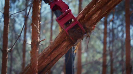 Working in forestry logging with a loader.