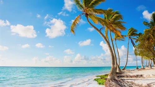 Coastline with palm trees