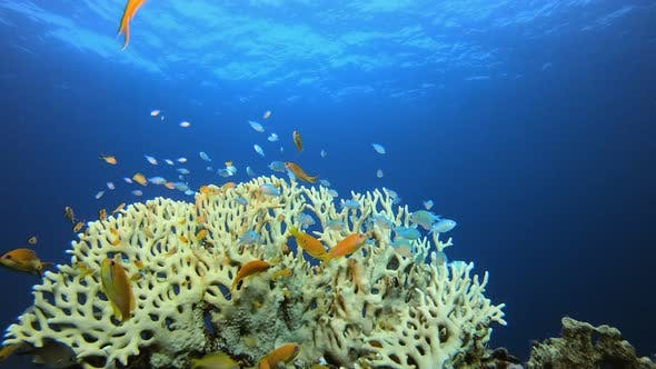 Cover Image for Underwater Marine Tropical Colourful Life