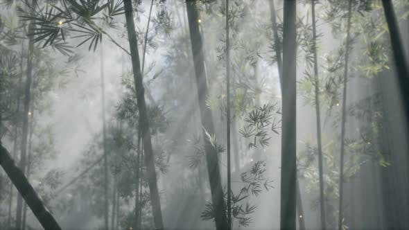 Thumbnail for Asian Bamboo Forest with Morning Fog Weather