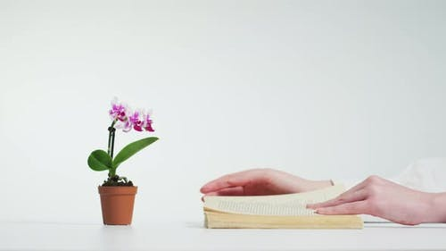 Reading a book near an orchid plant