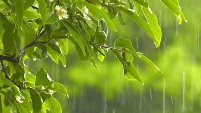 Raining On Plant Leaves