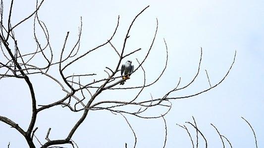 A Far Eagle