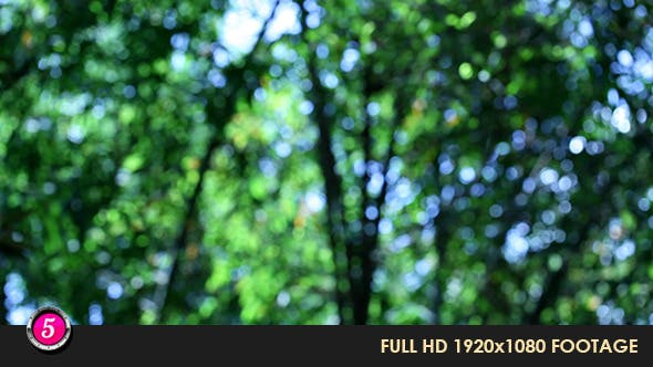 Thumbnail for Forest 280