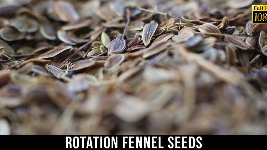 Thumbnail for Fennel Seeds